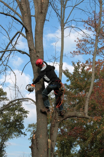 Capalaba Tree Removal Cleveland
