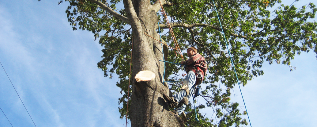 Tree Removal Chandler