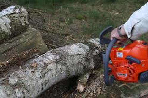 chainsaw doing tree removal in birkdale qld