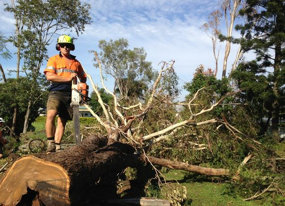 tree removal in Carina by Capalaba Tree Removal