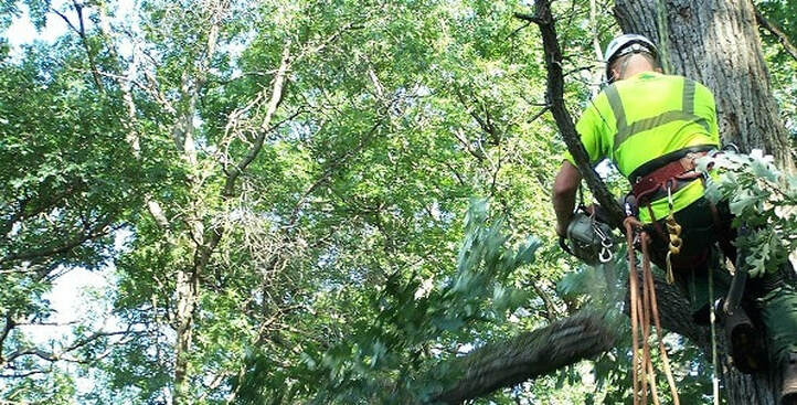 Tree Service Brisbane South