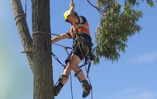 Tree Pruning Camp Hill