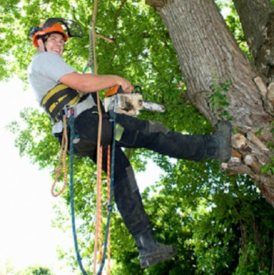 Tree Pruning Hawthorne