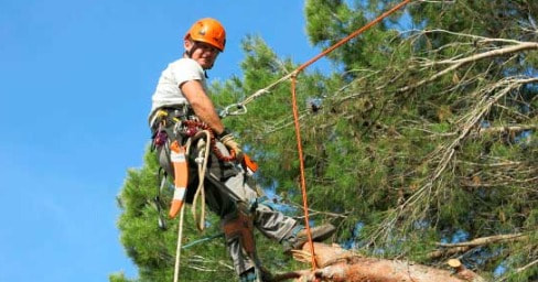 Tree Pruning Manly West