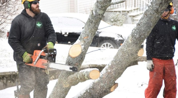 Tree Pruning West End