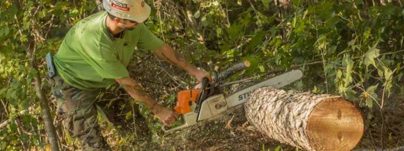 Tree Pruning Windsor