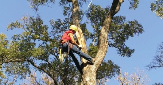 Tree Lopping Corinda