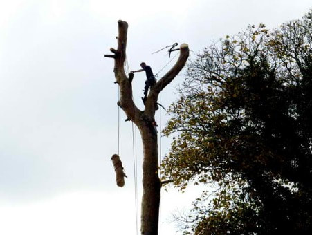 Tree Lopping Greenslopes