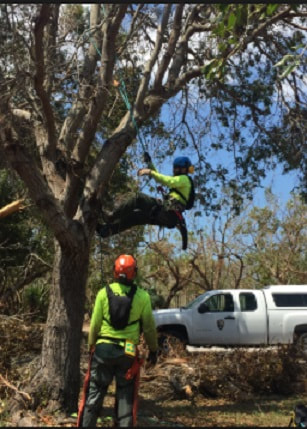 Tree Lopping Manly West