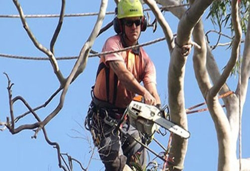 Tree Lopping Wilston