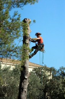 Tree Removal Annerley