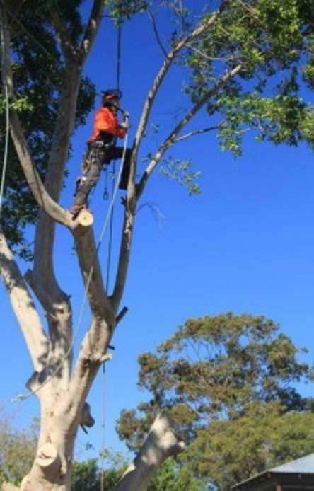 Tree Removal Ascot