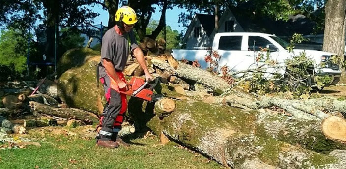 Tree Removal Windsor