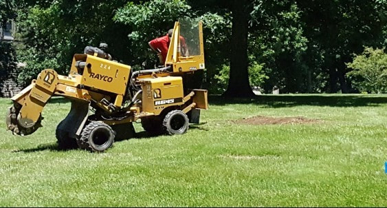 Stump Grinding Wilston