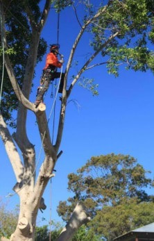 Tree Pruning Bardon