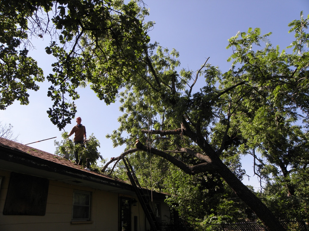 tree removal in Mansfield by Capalaba Tree Removal