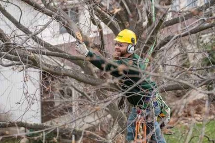 Tree Removal Spring Hill